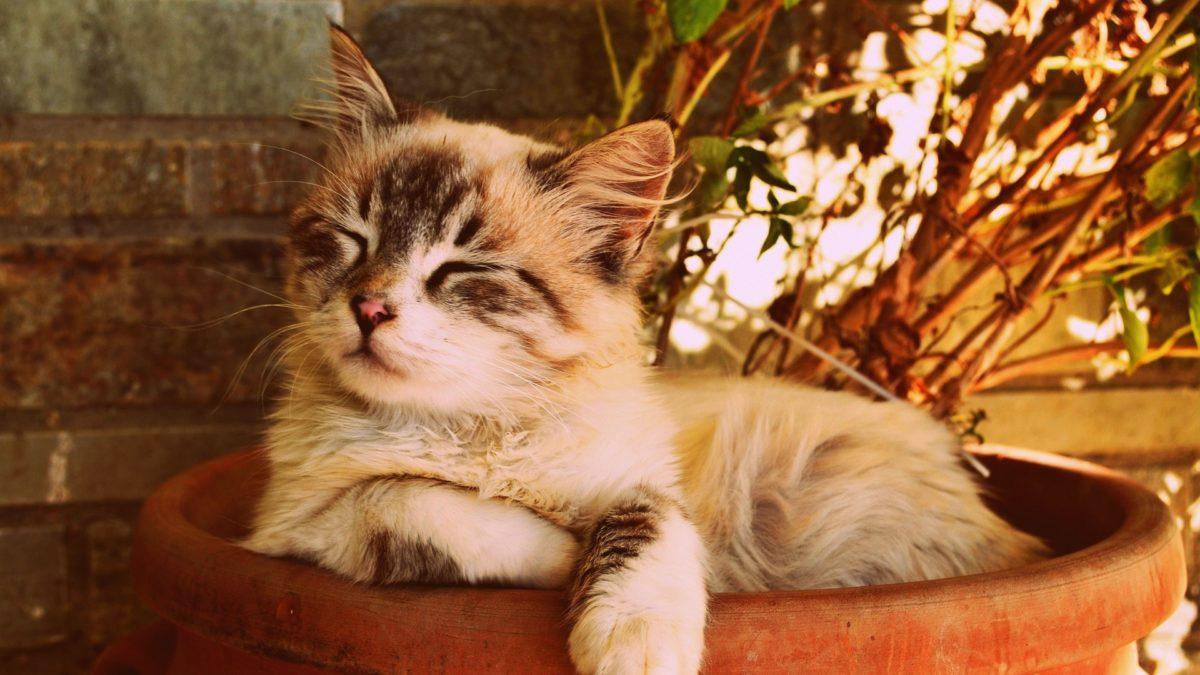 Sostenere una Buona Causa Significa anche Adottare un Gatto